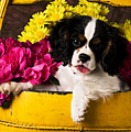 Puppy In Yellow Bucket  by Garry Gay