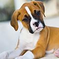 Puppy by Juan  Silva