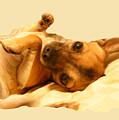 Puppy Love by Amanda Vouglas