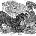 Puppy Love - Doberman Pinscher Pup by Kelli Swan