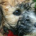Puppy Love I by Cheryl Rose