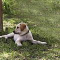 Puppy Love by Kim Henderson