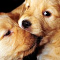 Puppy Love by Laura Mountainspring