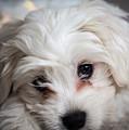 Puppy Love by Robert Walton