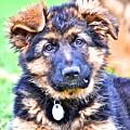 Puppy Oskar 2 by Danielle Sigmon