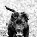 Puppy Play by James Hennis