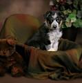 Puppy Portrait by Crystal Garner
