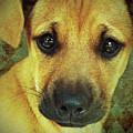 Puppy Portrait by KaFra Art
