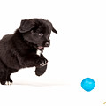 Puppy Pounce by Rikk Flohr