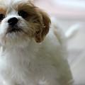 Puppy Sunshine by Karen Adams