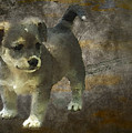 Puppy by Svetlana Sewell