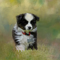 Puppyhood 1 by Jai Johnson