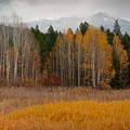Purcell Gold by Idaho Scenic Images Linda Lantzy
