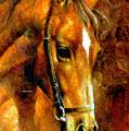 Pure Breed by Rafael Salazar