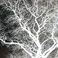 Pure Energy- Lightning Tree by Jacqueline McReynolds