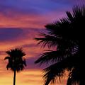 Pure Monsoon Sunsets by Elaine Malott