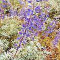 Pure Wild  Purple by Elton Eveningred