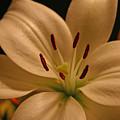 Purity In Full Bloom by Ken Jones