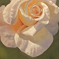 Purity Rose by Marilyn Tower