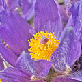 Purple And Gold - Bright by Cathy Mahnke