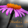 Purple And Orange Coneflower Mothers Day Brunch by Shelley Neff