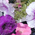 Purple And Pink Petunias Oil Painting by Elaine Plesser
