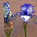 Purple And White Bearded Iris Bud by Emerald Studio Photography