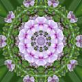 Purple And White Flowers  by Wanda-Lynn Searles