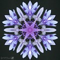 Purple And White Frosted Queen Mandala by J McCombie