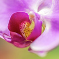 Purple And White Orchid 2 by Steven Jones