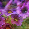 Purple And Yellow Morning 9121 Idp_2 by Steven Ward