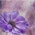 Purple Anemone Art by Teresa Wilson