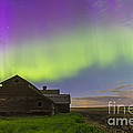 Purple Aurora Over An Old Barn by Alan Dyer