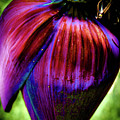 Purple Banana Pod by Corky Byer