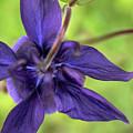 Purple Beaut by Edmund Mazzola