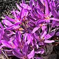 Purple Beauties by Reese Lewis