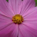 Purple Beauty by Alexis Ketner