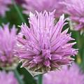 Purple Beauty by Joanna Raber