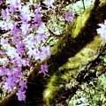 Purple Beauty by Maro Kentros