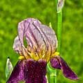 Purple Beauty by Sonali Gangane