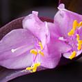 Purple Beauty by William Tasker