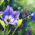 Purple Bell Flower by Olimpia Wong