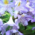 Purple Bells Of Spain by Corynne Hilbert