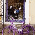 Purple Bicycle by Rae Tucker