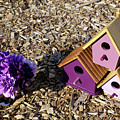 Purple Birdhouses 2 by Douglas Barnett