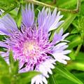 Purple Bloom by Linda Covino