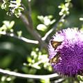 Purple Blossom by Doc Hafferty