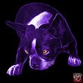 Purple Boston Terrier Art - 8384 - Bb by James Ahn