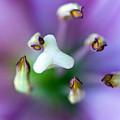 Purple Botanical by Frank Tschakert