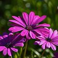 Purple Bouquet by Maria Keady